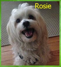 ROSIE_210X230